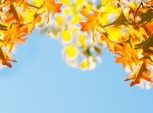 De bladeren van de esdoorn over de blauwe hemel Royalty-vrije Stock Afbeeldingen