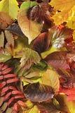 De bladeren van de herfst Stock Afbeeldingen