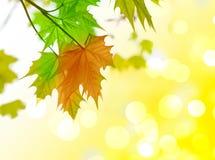 De bladeren van de herfst, stock fotografie