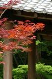 De bladeren van de herfst royalty-vrije stock foto