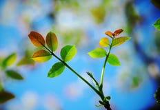 De Bladeren van de herfst Royalty-vrije Stock Afbeelding