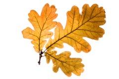 De bladeren van de herfst. Royalty-vrije Stock Foto