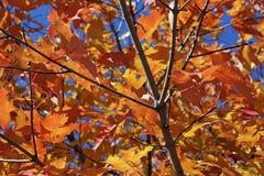 De herfstbladeren stock afbeeldingen