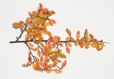 De bladeren van de herfst. Royalty-vrije Stock Fotografie