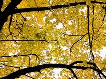 De bladeren van de herfst in boom Stock Foto