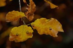 De bladeren van de herfst in bos Stock Foto