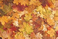 De bladeren van de herfst in bos Royalty-vrije Stock Foto's