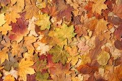 De bladeren van de herfst in bos Stock Afbeeldingen