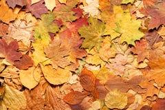 De bladeren van de herfst in bos Royalty-vrije Stock Afbeeldingen