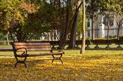 De Bladeren van de herfst - Daling Royalty-vrije Stock Foto's