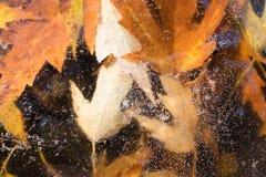 De bladeren van de herfst die in ijs worden bevroren Royalty-vrije Stock Afbeelding