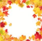 De bladeren van de herfst die op witte achtergrond worden geïsoleerd Stock Foto's