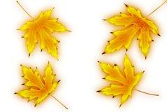 De bladeren van de herfst die op witte achtergrond worden geïsoleerde Stock Afbeelding
