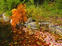 De bladeren van de herfst in een vijver stock afbeelding