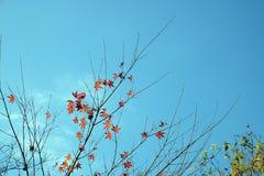 De bladeren van de herfst en blauwe hemel Stock Foto's