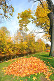 De bladeren van de herfst en de rivier van Donau Royalty-vrije Stock Afbeelding