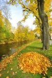 De bladeren van de herfst en de rivier van Donau Royalty-vrije Stock Foto