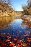 De bladeren van de herfst in het water stock foto