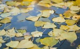 De bladeren van de herfst in meer royalty-vrije stock foto