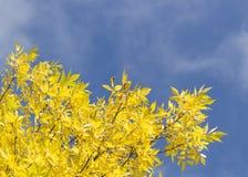 De bladeren van de herfst met de blauwe hemelachtergrond Stock Afbeeldingen