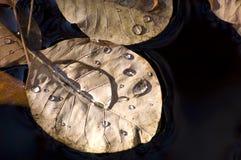 De Bladeren van de herfst met de Dalingen van het Water royalty-vrije stock afbeelding