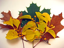 De Bladeren van de herfst met Gele Bessen stock afbeeldingen