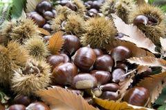 De bladeren van de herfst met kastanjes Stock Afbeeldingen