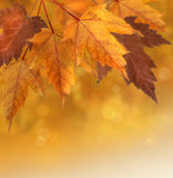 De bladeren van de herfst met ondiepe nadrukachtergrond Stock Foto