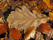 De bladeren van de herfst met waterdalingen Stock Afbeeldingen