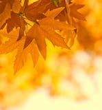 De bladeren van de herfst, ondiepe nadruk Stock Afbeeldingen
