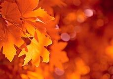 De bladeren van de herfst, ondiepe nadruk Stock Foto's