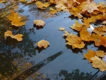 De bladeren van de herfst op auto Royalty-vrije Stock Afbeeldingen