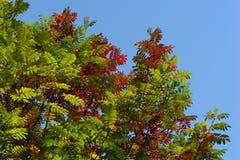 De bladeren van de herfst op blauwe hemel Stock Foto