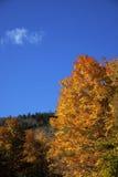 De bladeren van de herfst op blauwe hemel Stock Afbeeldingen