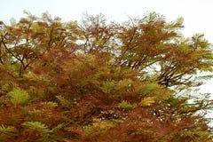 De bladeren van de herfst op bomen Stock Afbeeldingen