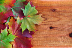 De Bladeren van de herfst op Ceder Stock Foto's