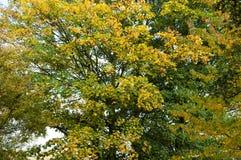 De bladeren van de herfst op de bomen Royalty-vrije Stock Foto's