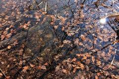 De bladeren van de herfst op de oppervlakte van het water Royalty-vrije Stock Afbeeldingen