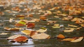 De bladeren van de herfst op de weg stock video