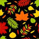 De bladeren van de herfst op de zwarte. Stock Fotografie