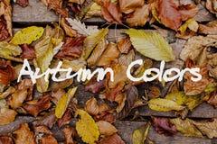 De bladeren van de herfst op houten achtergrond Autumn Colors Concept Wallpaper Royalty-vrije Stock Fotografie