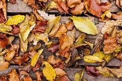 De bladeren van de herfst op houten achtergrond Autumn Concept Wallpaper Stock Afbeelding