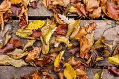 De bladeren van de herfst op houten achtergrond Autumn Concept Wallpaper Royalty-vrije Stock Fotografie
