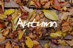 De bladeren van de herfst op houten achtergrond Autumn Concept Wallpaper Stock Foto