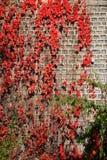De Bladeren van de herfst op Muur Royalty-vrije Stock Afbeeldingen