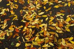 De bladeren van de herfst op nat asfalt Royalty-vrije Stock Afbeelding