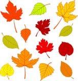 De bladeren van de herfst op wit Stock Foto's