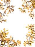 De Bladeren van de herfst op Wit Stock Fotografie
