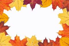 De bladeren van de herfst op witte achtergrond Stock Afbeeldingen
