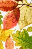 De bladeren van de herfst op witte achtergrond. Verticale mening Royalty-vrije Stock Fotografie
